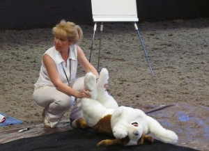Position for temporary treatment of a dog in shock