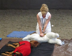 Canine First Aid 018