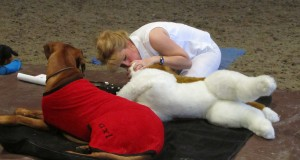 Canine Rescue Breaths expo