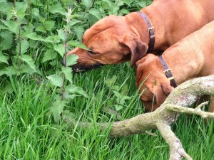 Grass eating