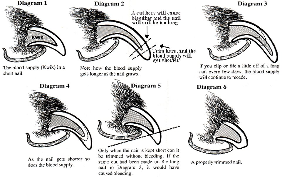 Structure of the Nail and how to trim them