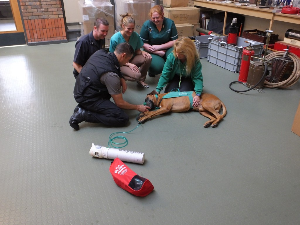 Axl trying a pet oxygen mask for size