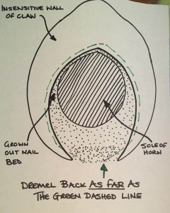 nail cross section